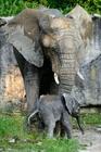 Ve zlínské zoo se narodilo první mládě slona afrického v České republice
